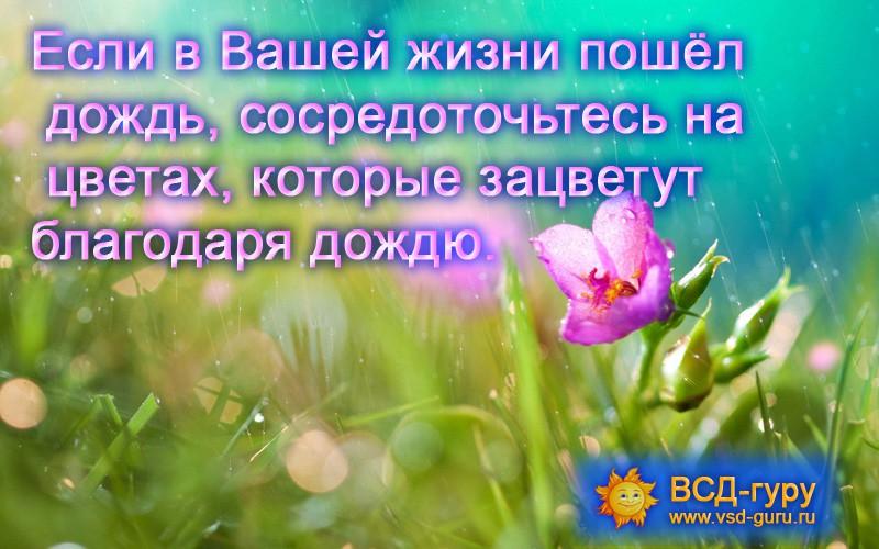 Если в Вашей жизни пошёл  дождь, сосредоточьтесь на цветах, которые зацветут благодаря дождю